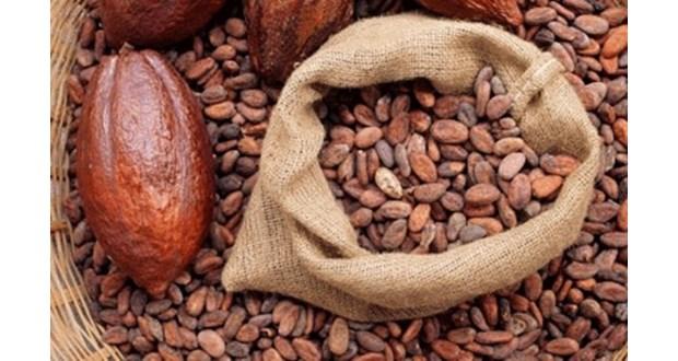 بهترین پودر کاکائو